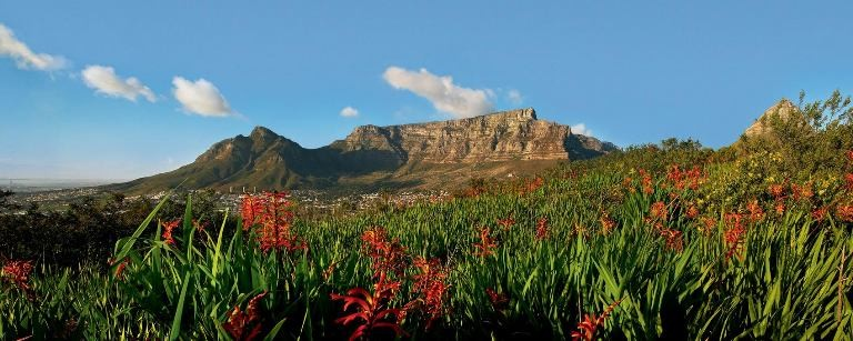 Everything You Ever Wanted to Know About Table Mountain
