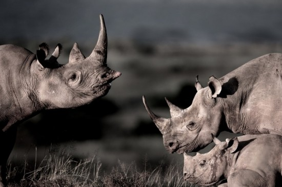 Teaming up for Rhinos