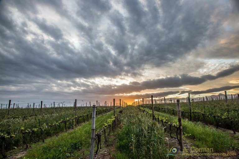 Discover South Africa's Newest Wine Route…