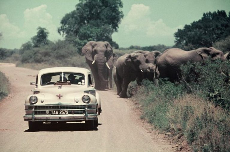When My Grandad was a Kid in the Kruger Park