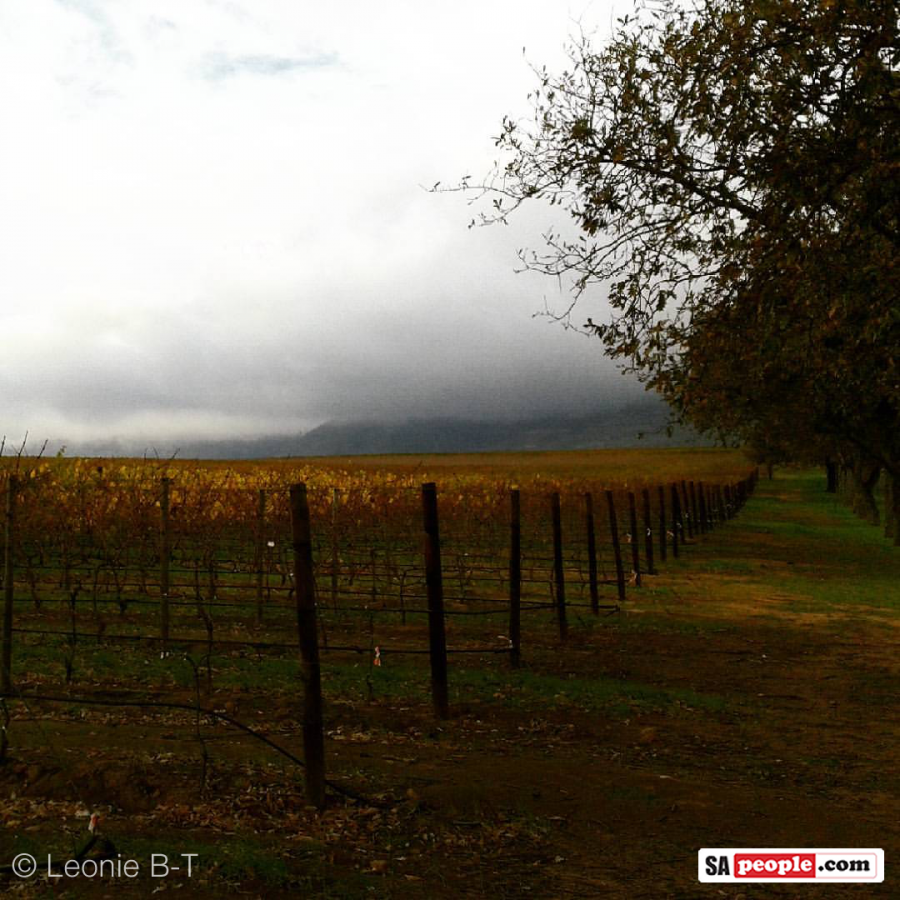 vineyards-groot-constantia