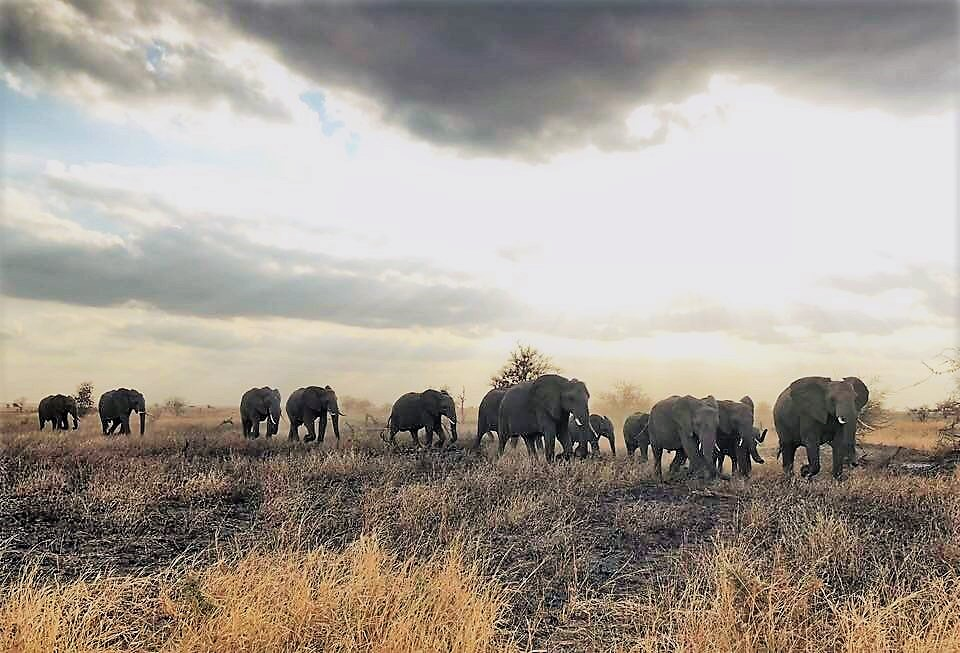cave photo competition winner kruger park elephants south africa
