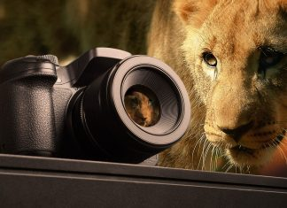 lion camera packing for african photographic safair