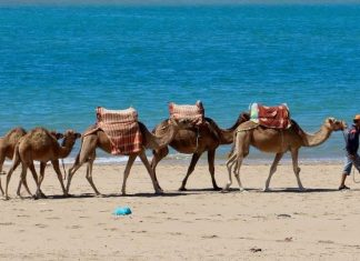 morocco bruce marais travel tourism camels beach