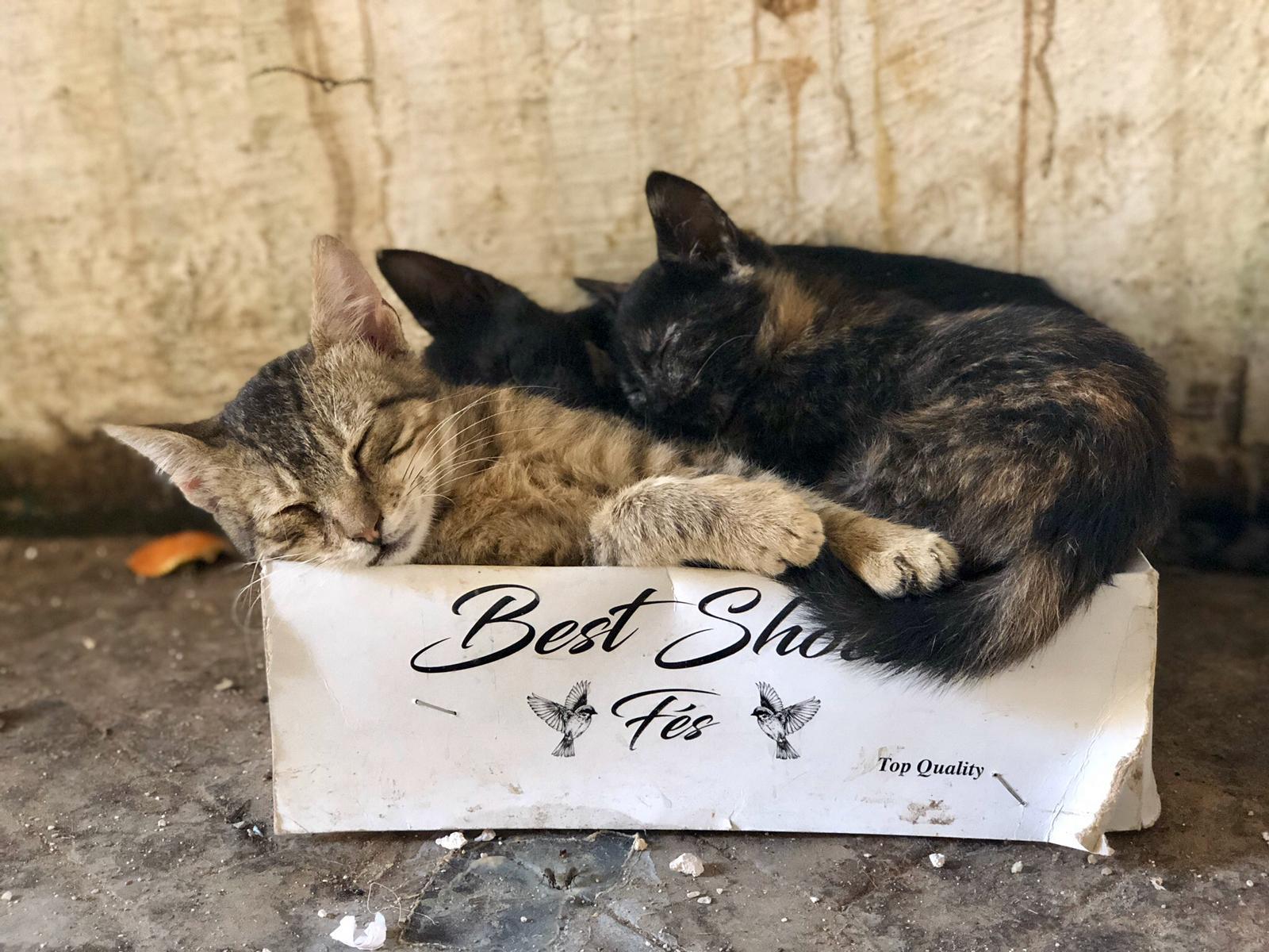 morocco bruce marais travel photography kittens medina