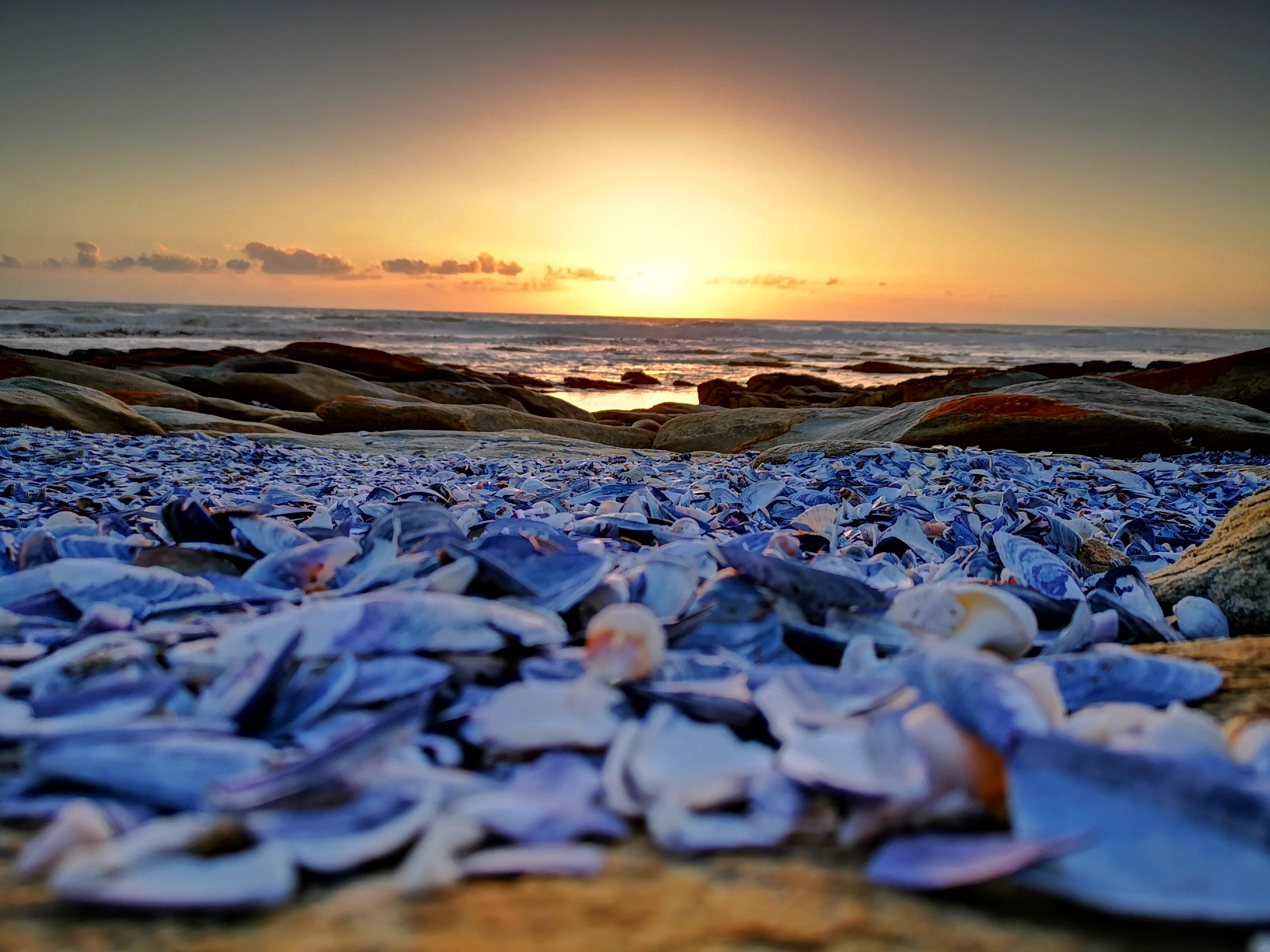 seashells sunset photo competition winner kruger park south africa