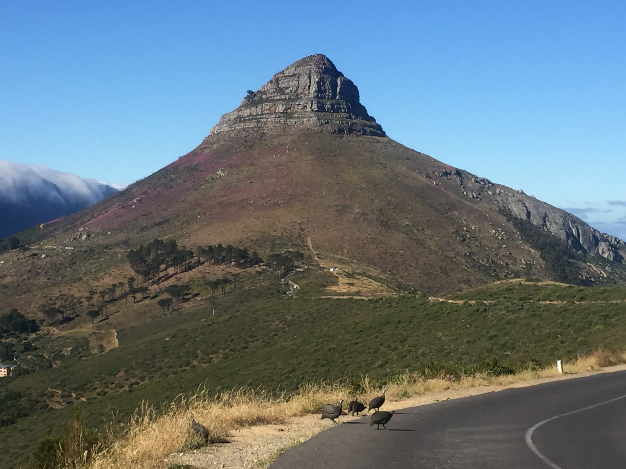 lions head table mountain cape town views travel