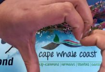 cape whale coast south africa travel