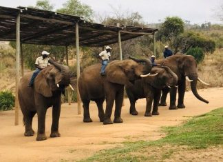 elephant riding hazyview south africa