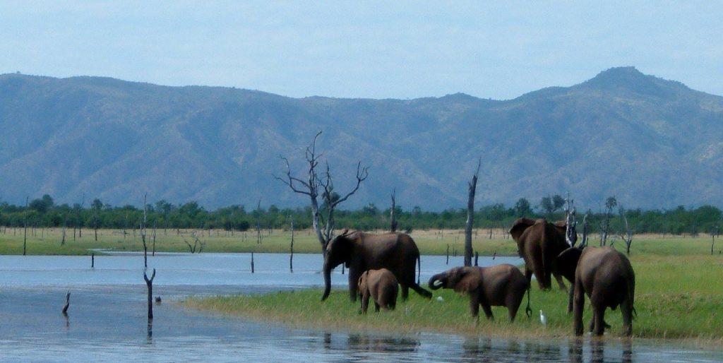 matusadona national park zimbabwe kariba elephants