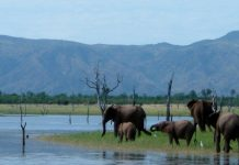 matusadona national park zimbabwe kariba elephants