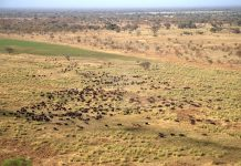 Zakouma National Park Chad