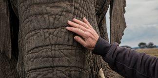 elephant interaction pex
