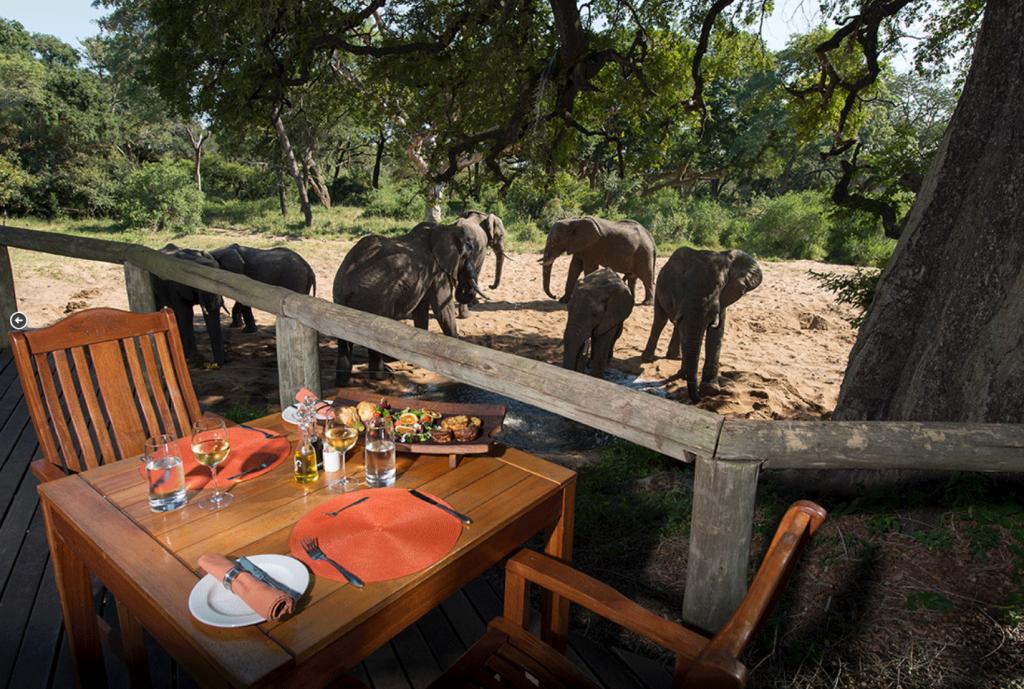 tintswalo manor lodge manyeleti south africa villa safari