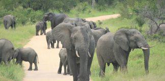 elephants kruger sanparks closes coronavirus