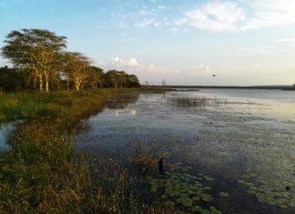 isimangaliso wetland park south africa