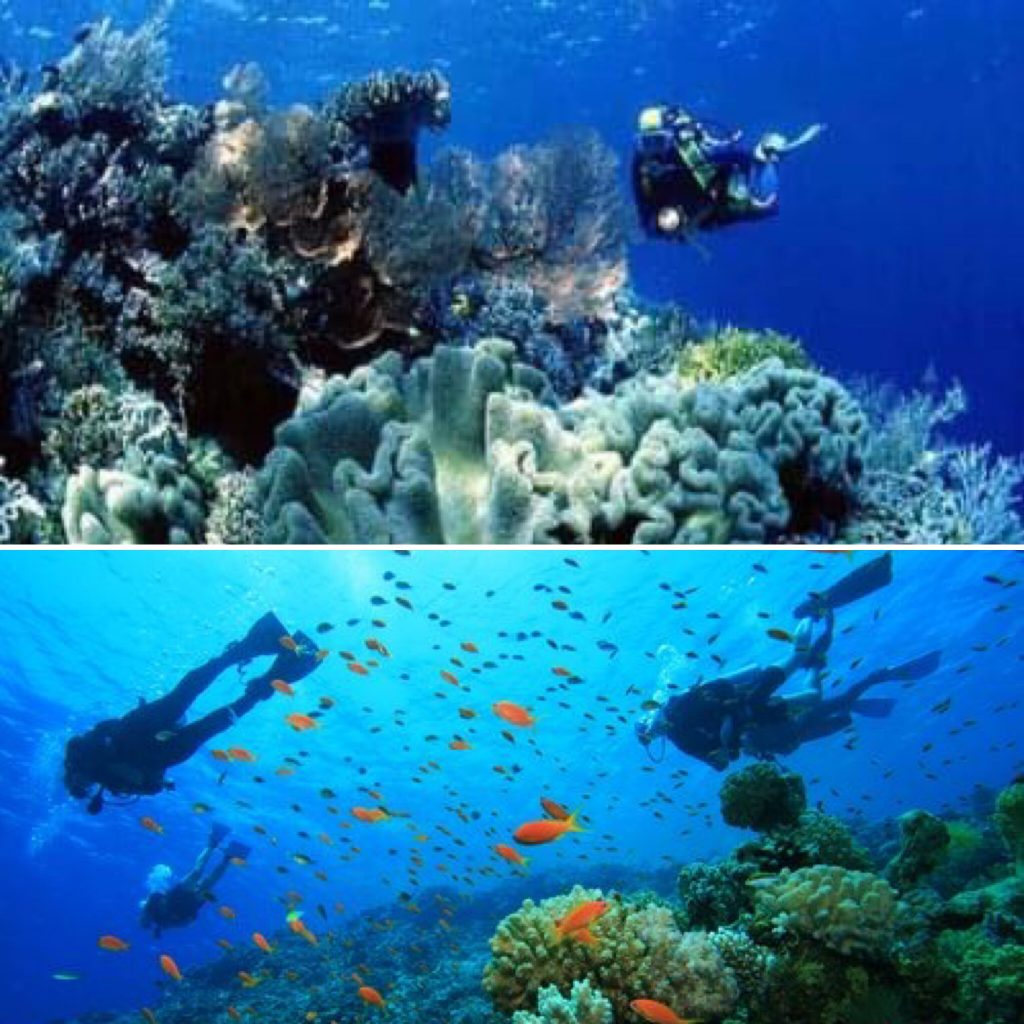 indonesia sodwana bay south africa scub travel split picture
