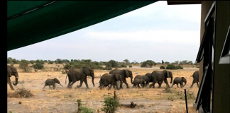 elephants botswana tent travel