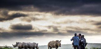 rhino ridge hluhluwe south africa