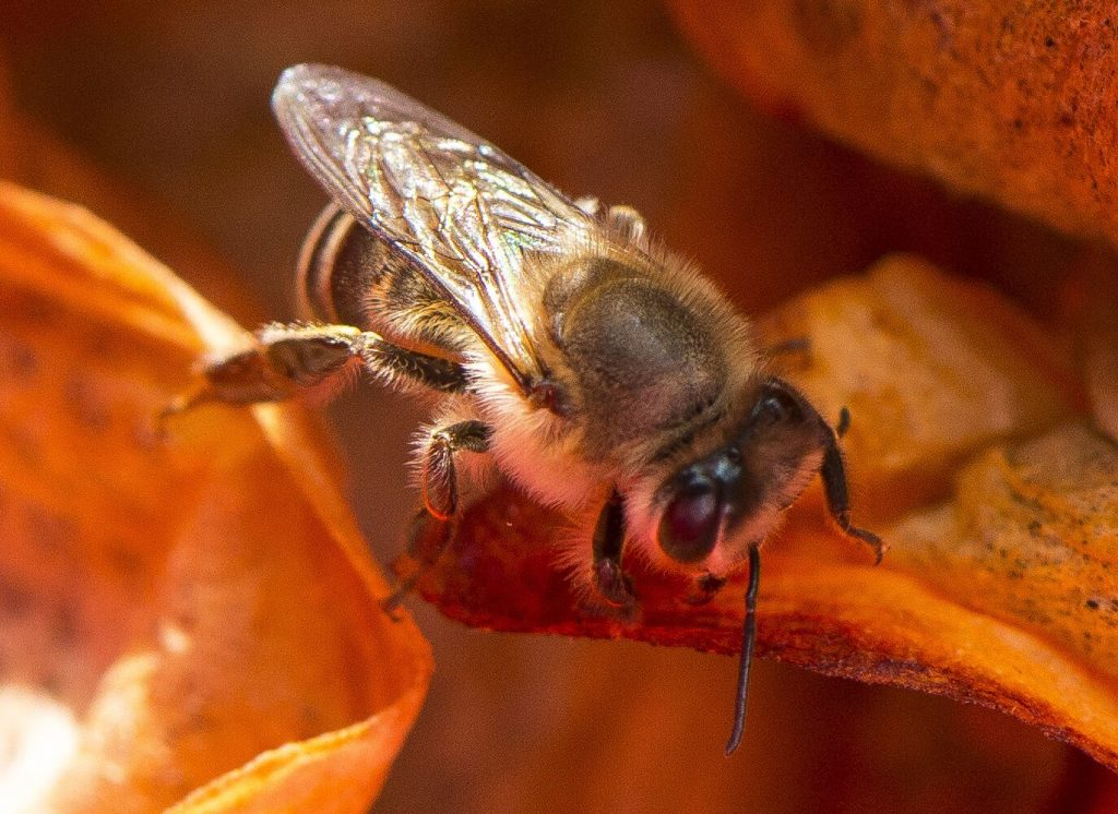bee cape town tops global nature challenge