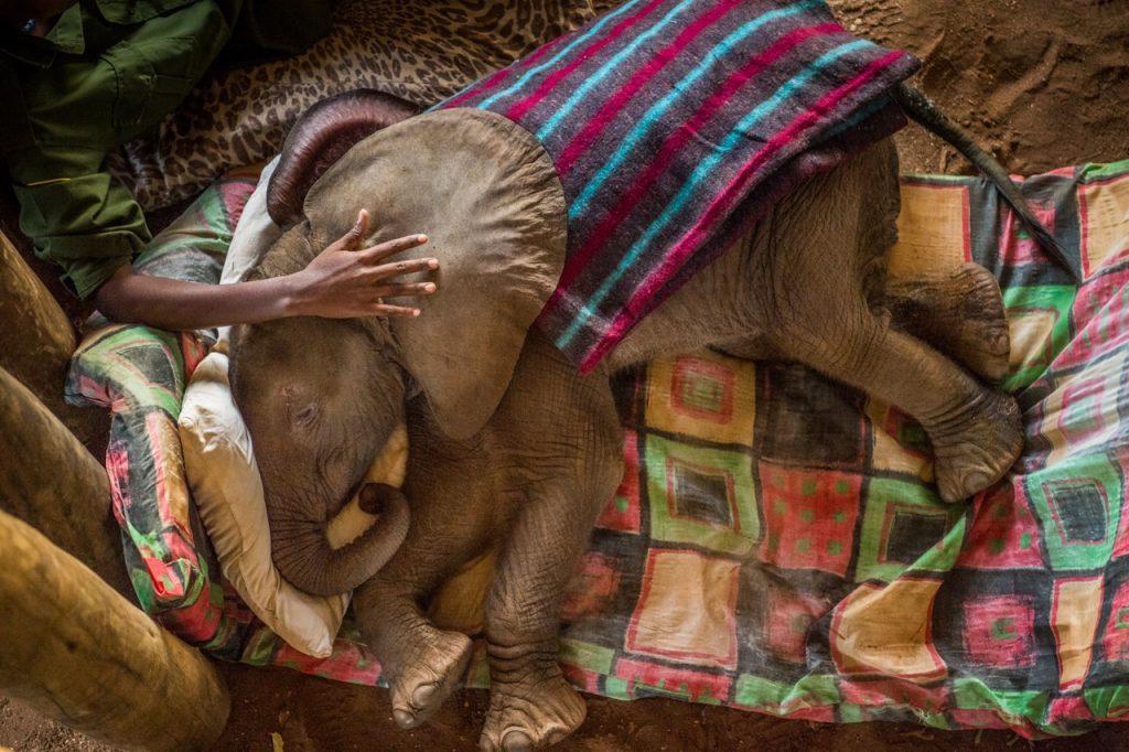 reteti elephant sanctuary kenya