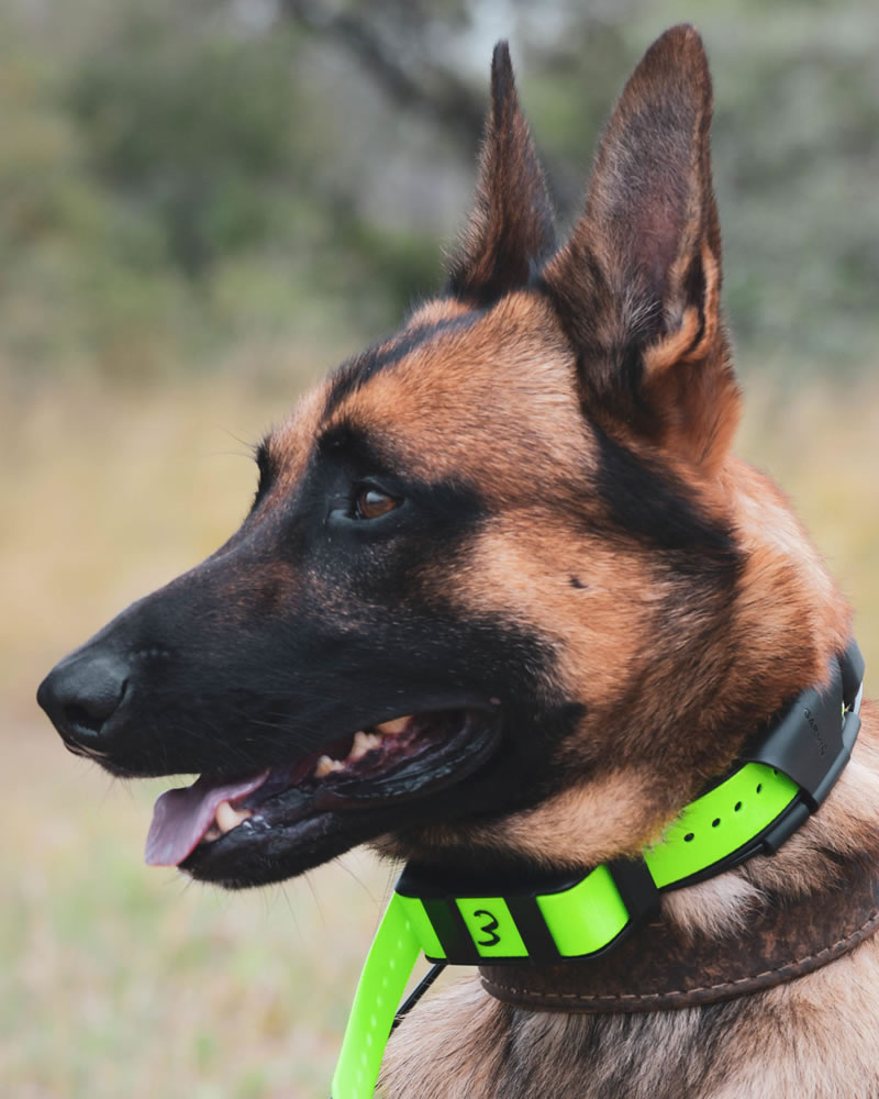 k9 dog conservation timbavati south africa