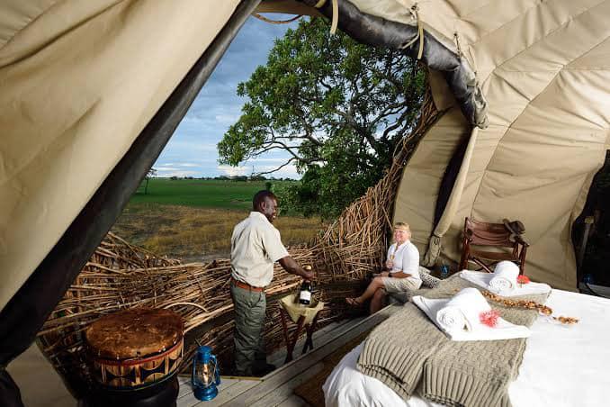 chisa busanga kafue zambia green safaris travel birds nest