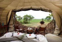 chisa busanga kafue zambia green safaris travel birds nest