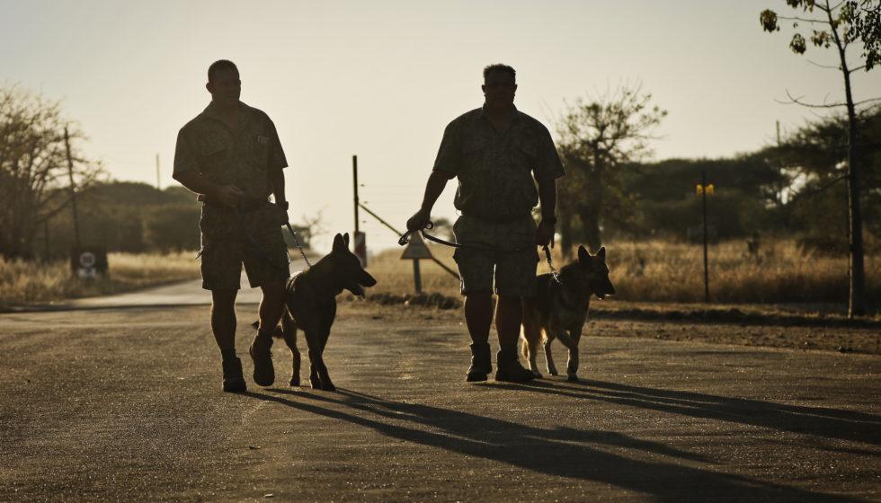 k9 conservation timbavati south africa