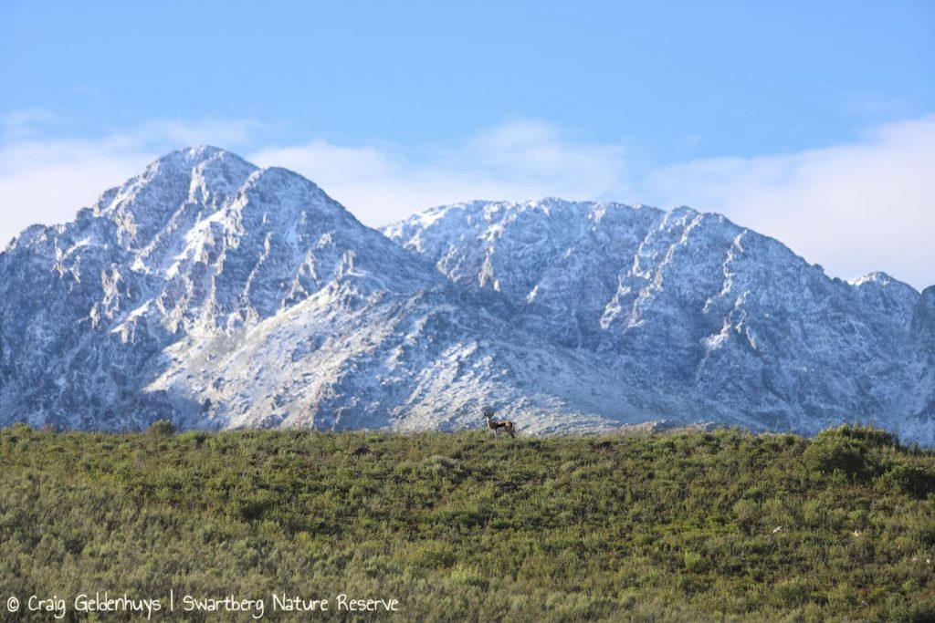 snow swartberg nature reserve mountain