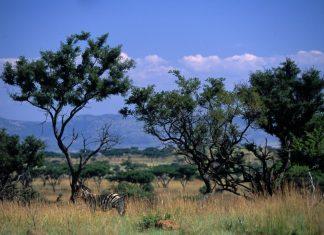 weenen game reserve kwazulu natal south africa wildlife