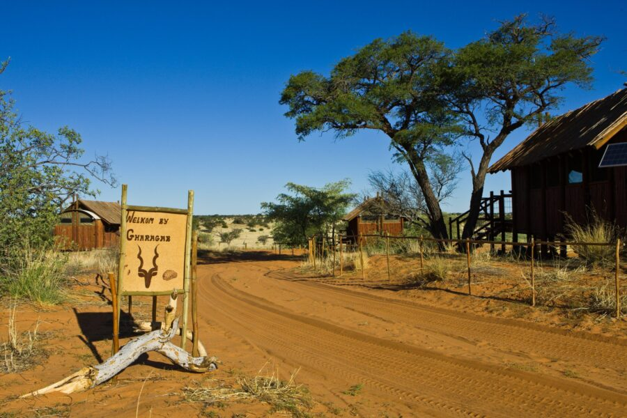 kgalagadi transfrontier national park south africa travel