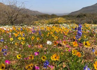 enjo-nature-farm-wildflowers-bloom-south-africa