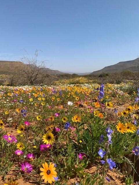 West coast flowers 2020 - Enjo Nature Farm