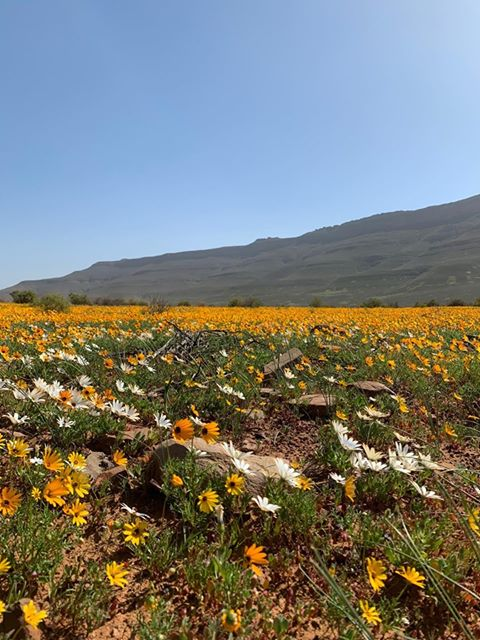 West Coast flowers 2020 - Enjo Nature Farm wild flowers bloom