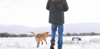 south-african-dog-snow-first-time
