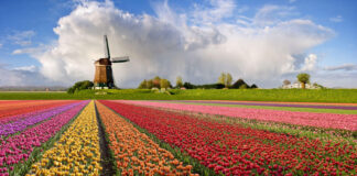 The Netherlands facts you never knew