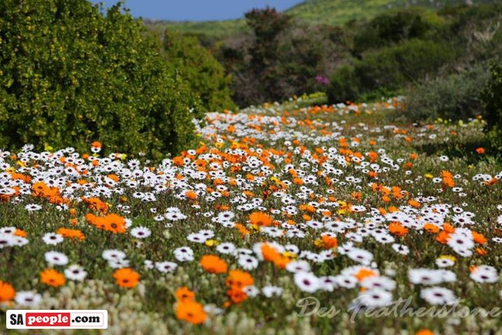 where to view south africa's wild flowers season