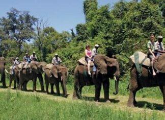 elephant back ride riding south africa