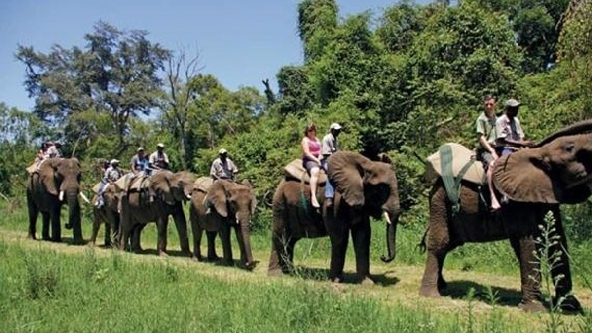 elephant back ride riding south africa