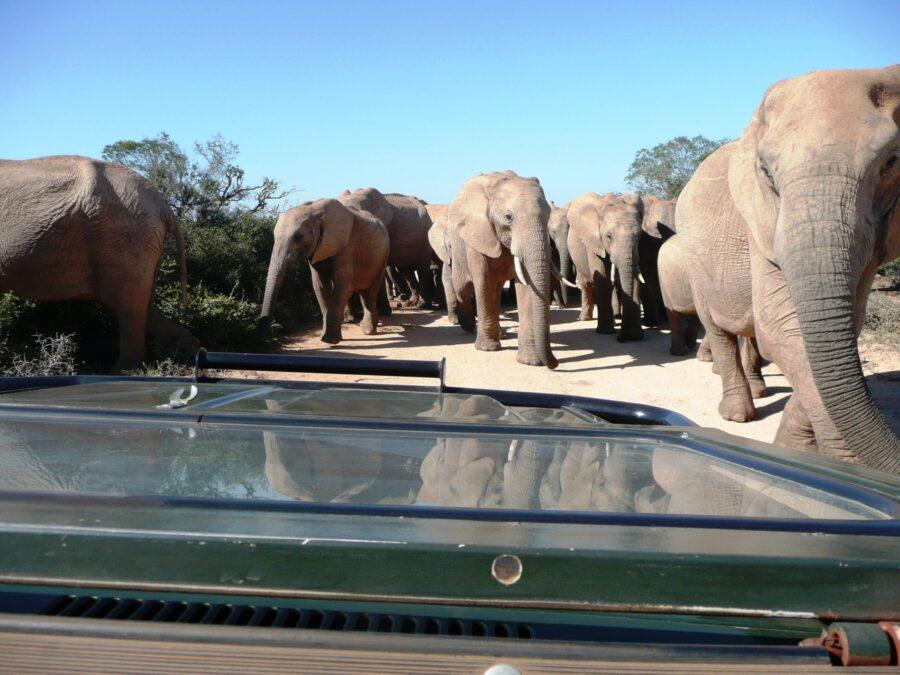 gorah elephant tented camp addo south africa national park