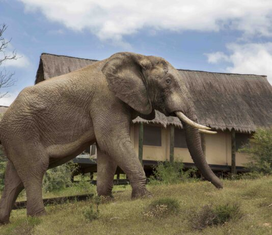 gorah elephant tented camp addo south africa national park
