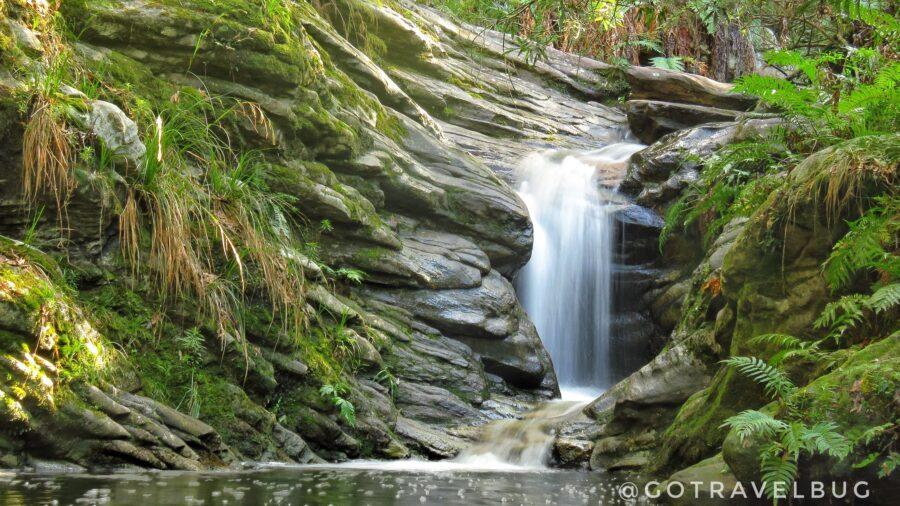 goudveld forest knysna garden route south africa