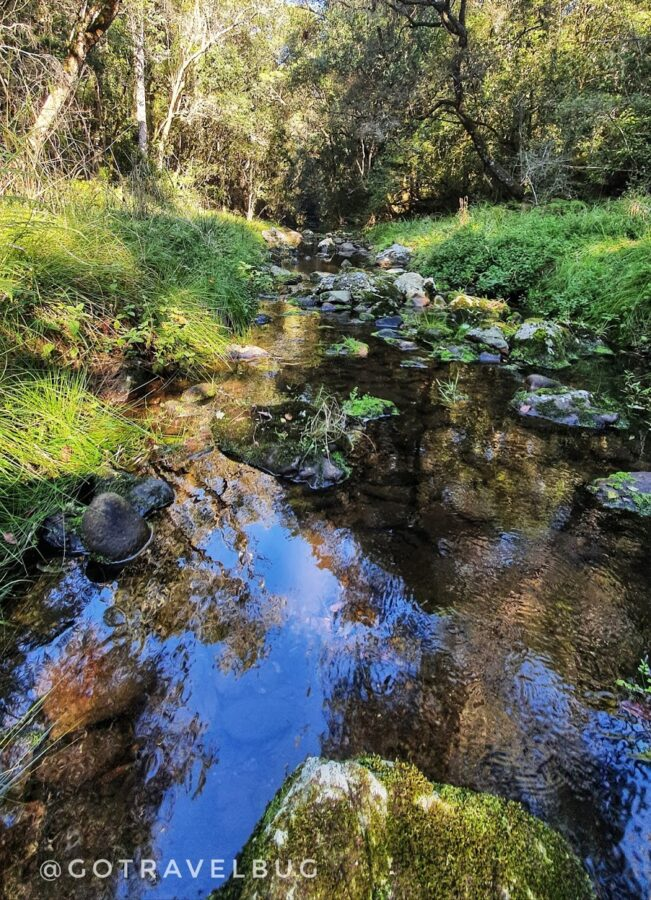 black burn nature reserve garden route south africa